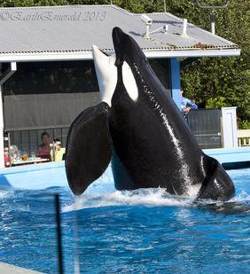 Tilikum The Killer Whale Dies