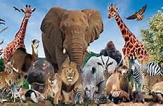 5 Interesting Zoo Animals