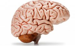 10 Facts about the Human Brain