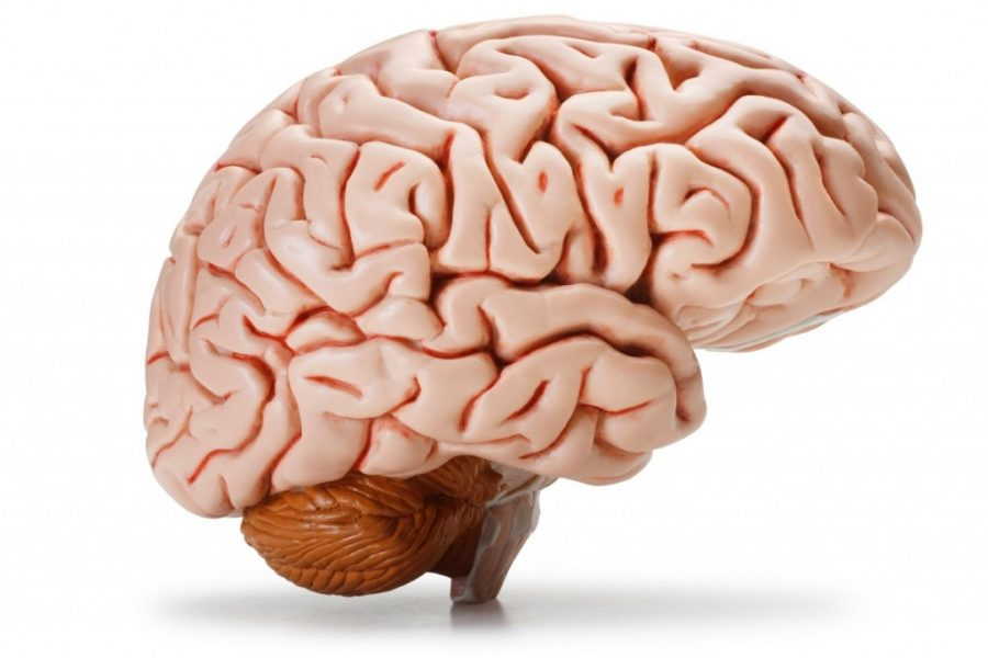the voyager : 10 facts about the human brain, Muscles