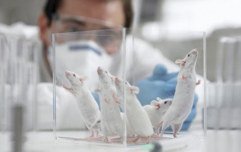 10 Facts About Animal Testing
