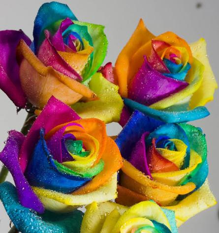 How to Tie-Dye a White Rose!