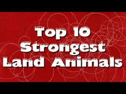 Strongest Animals In The World