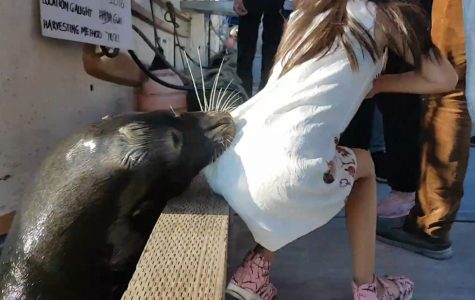 Sea Lion Pulls Girl In Water