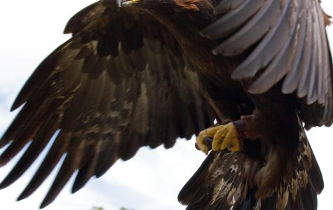 10 Interesting Facts About Eagles