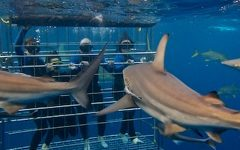 Places to swim with sharks!