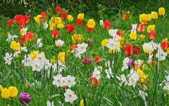 Flowers That Grow In Spring