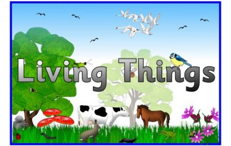 Ten Top Favorite Living Things