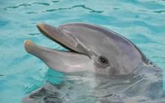 Facts about Dolphin's