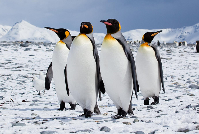 Facts about Penguins!