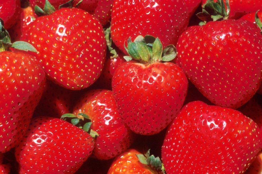 Fun Facts About Strawberries