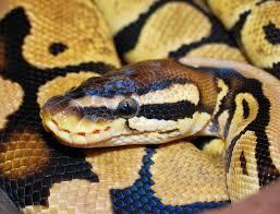 Top 5 Most Poisonous Animals