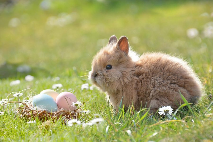 3 Ideas Where to Celebrate Easter